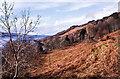 NM4727 : Dead bracken on slope above Loch Scridain by Trevor Littlewood