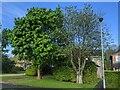 TF0820 : Suburban trees by Bob Harvey