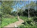 SE8742 : Wildlife area, off Londesborough Road by Christine Johnstone