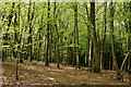 TQ2758 : Banstead Wood by Peter Trimming