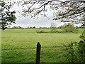SO8694 : Rabbit Field Scene by Gordon Griffiths