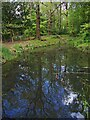 SK3282 : Collier's Pond in Ecclesall Woods by Graham Hogg