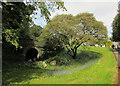 SW9175 : Bluebells, Prideaux Place by Derek Harper