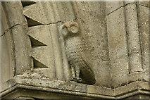 SK6280 : Scofton Owl by Richard Croft