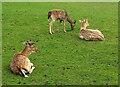 SW9175 : Deer, Prideaux Place by Derek Harper