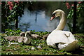 TQ3065 : Mother and Cygnets by Peter Trimming