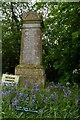 TM1359 : Bluebells planted by the village children, Stonham Aspal churchyard by Christopher Hilton