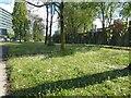 SJ8497 : Wildflowers on London Road by Gerald England