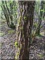 TF0820 : Moss on a trunk by Bob Harvey