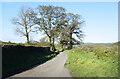 SX3484 : Ridgegrove Lane by Des Blenkinsopp