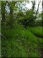 TF0820 : Grasses in flower by Bob Harvey