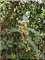 TF0820 : Flowers on the Holly by Bob Harvey