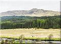 NN2940 : Plantation on slope of Ben Inverveigh by Trevor Littlewood