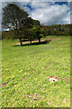 NZ4346 : Flower-rich meadow north of Hawthorn Dene by Andy Waddington