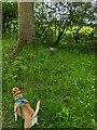 TF0820 : Dog, Bird by Bob Harvey