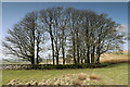 NY6312 : Trees in the field corner below Coalpit Hill by Andy Waddington