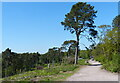 SP0075 : Path at Cofton Hill by Mat Fascione