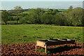 SX8763 : Pasture by Cockington Road by Derek Harper