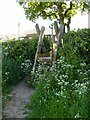 SK6245 : Ladder stile, off Catfoot Lane by Alan Murray-Rust