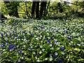 H1858 : Bluebells and wild garlic, Drumaran by Kenneth  Allen