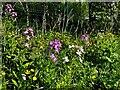 H4379 : Wild plants, Castletown by Kenneth  Allen
