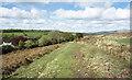 SX4981 : West Devon Way at West Blackdown by Des Blenkinsopp