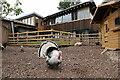 NZ2664 : Turkey, Ouseburn Farm by Andrew Curtis