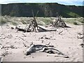 NO7463 : Driftwood on St Cyrus beach by Oliver Dixon