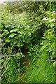 SX8965 : Overgrown path from Queensway by Derek Harper