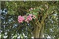 TF0920 : Ornamental tree by Bob Harvey