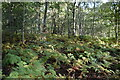 TQ8622 : Bracken, Flatroper's Wood by N Chadwick