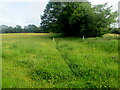 SO3402 : Track through a field, Monkswood, Monmouthshire by Jaggery