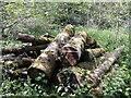 ST5161 : Lying lumber in Butcombe by Neil Owen