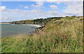 NO7153 : Grassy vegetation on the clifftop above Boddin Harbour, Angus by Adrian Diack