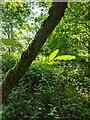 TF0820 : Backlit leaf by Bob Harvey