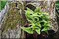 TA1746 : Log and soft shield fern by David Lally