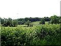 TL8837 : Farmland off Henny Road by Geographer
