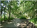 NY2724 : The Cumbria Way, Latrigg Woods by Adrian Taylor