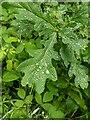TF0820 : Oak with sparkles by Bob Harvey