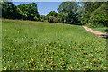 TQ2748 : Oak seedlings by Ian Capper