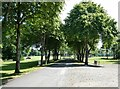 NY9863 : Tree-lined avenue at Tynedale Park by Oliver Dixon