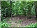 TF0820 : No undergrowth by Bob Harvey