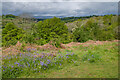 SO3928 : Ewyas Harold Common by Ian Capper