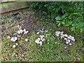 TF0820 : Fungi in the rain by Bob Harvey