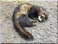 SO8836 : Dead polecat by Philip Halling