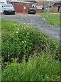 TF0820 : Meadowsweet in the dyke by Bob Harvey