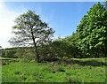 NZ0748 : Field trees, Castleside by Robert Graham