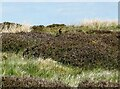 NZ0446 : Stonechat near The Moorcock by Robert Graham