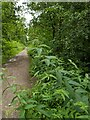 TF0820 : Loosestrife by the path by Bob Harvey