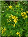 TF0820 : The flowers of St John's Wort by Bob Harvey
